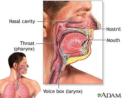 Anatomy and function of the respiratory system - TriHealth: Discover ...