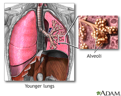 Chronic obstructive pulmonary disease - TriHealth: Discover