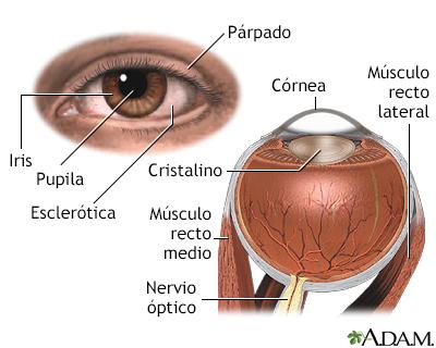Anatomía interna y externa del ojo - TriHealth: Discover the Power ...