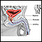 Prostatectomy - series - Normal anatomy